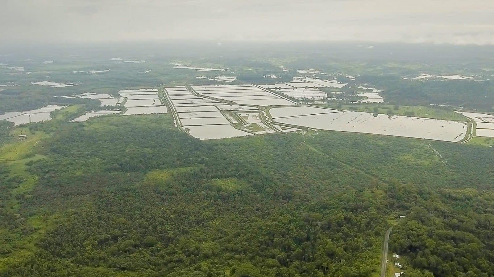 save the paradise, deforestation, mompiche