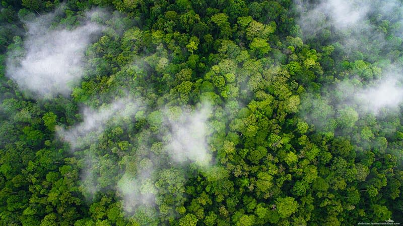 Healthy Rainforest in the North of Ecuador from above.