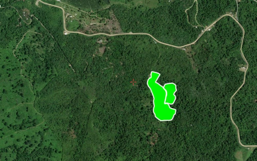 First Protected hectares of rainforest