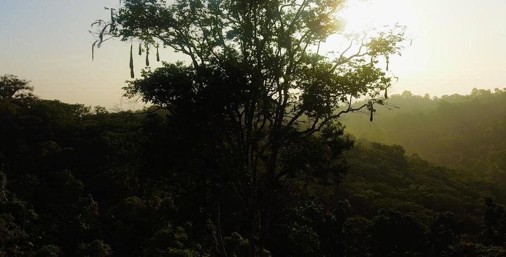 Birds nest in rainforest