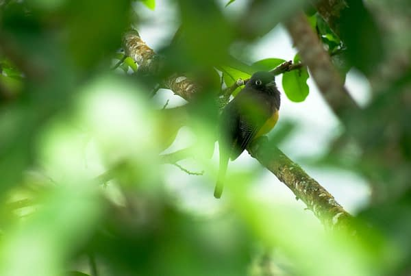 Bird sitting in a very green bush